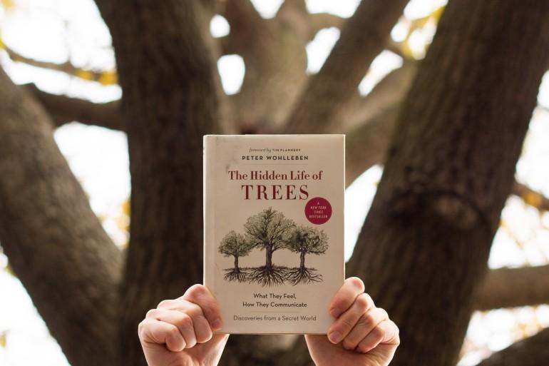 Hidden Life of Trees from below (1 of 1).jpg